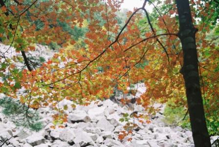 branch rocks